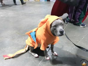 Dog dressed as Charizard